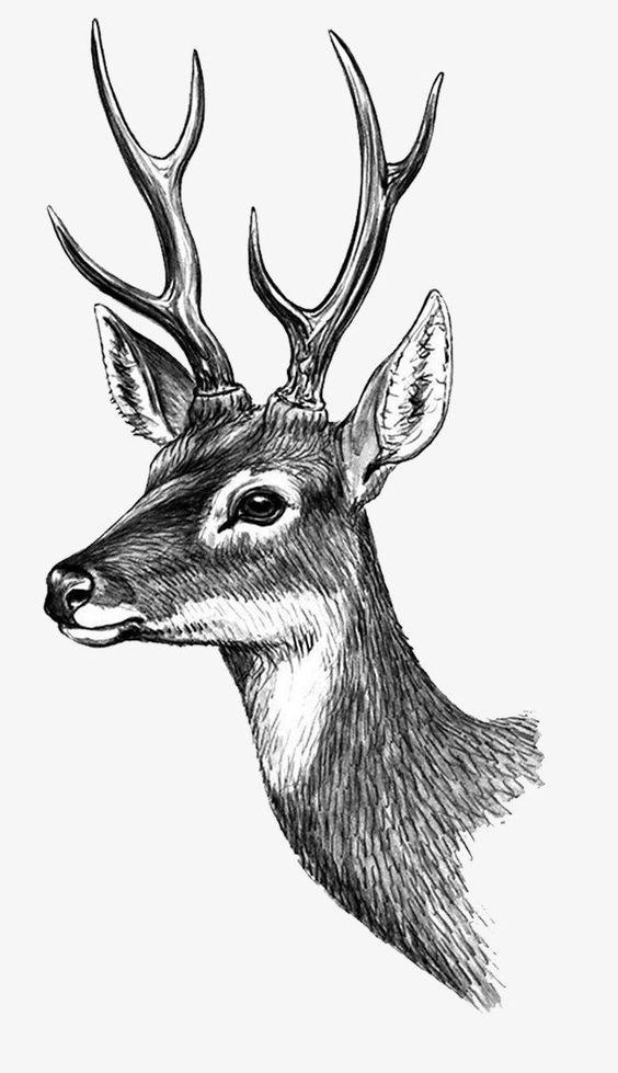 Сколько животных вы видите на изображении? | 979x564