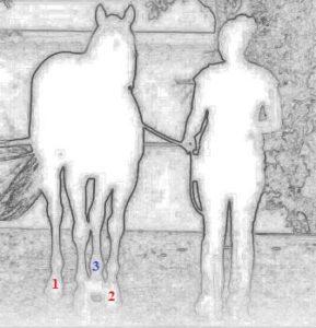 Ответ куда идет лошадь с девушкой