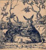 От кого прячутся зайцы? Загадка с ответом